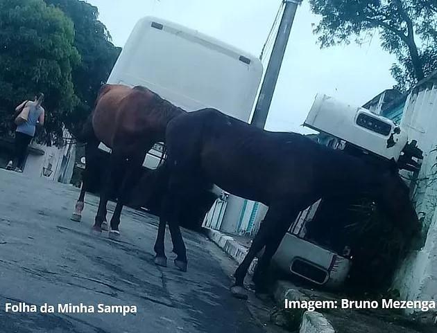 Cavalos soltos nas ruas preocupam moradores em Parelheiros e Grajaú